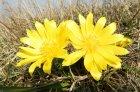 41-npr-devinska-kobyla-_-flora-33879931.jpg
