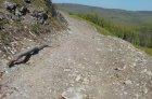 Pomerne dobre upravená lesná cesta pod východným vrcholom